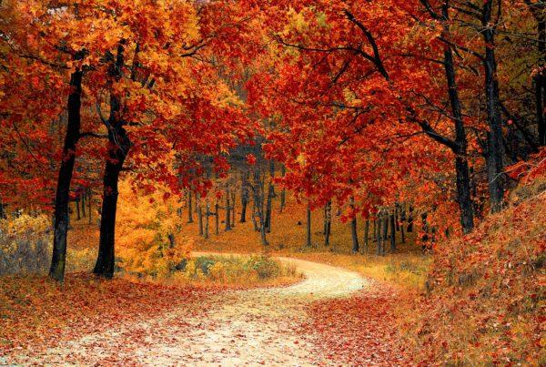 Autumn Vienna